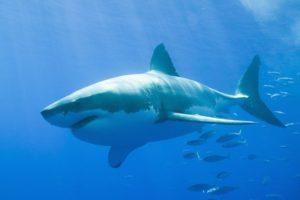 13-07-16-shark.jpg