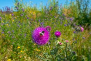 13-07-22 Bienen.jpg