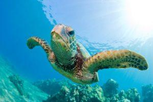 13-07-24 Schildkröte.jpg