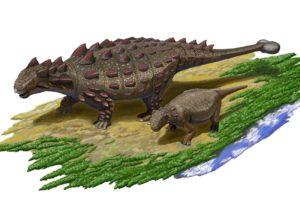 13-07-26 Ankylosaurus.jpg