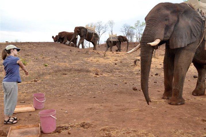 13-10-10-elefant.jpg