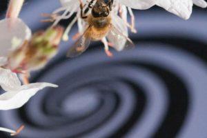 13-10-29 Bienen.jpg