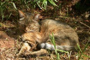 13-12-16 Katzen.jpg