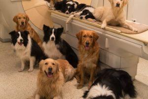 14-02-20 Hunde.jpg