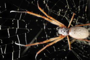 14-02-28 Spinnen.jpg