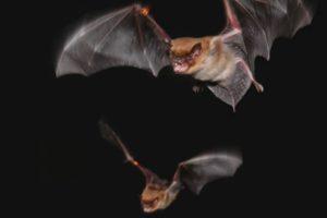 14-03-27  bats.jpg