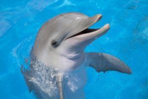 14-08-13-delfin.jpg