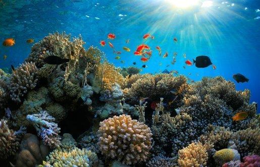 14-08-21 Korallen.jpg