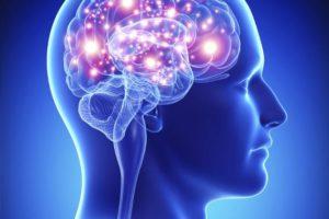 14-08-25 Gehirn.jpg