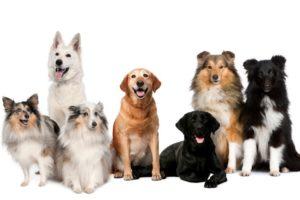 14-09-19 Hunde.jpg