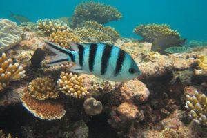 14-12-05-reef.jpg
