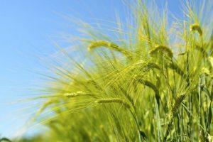 14-12-09-crop.jpg