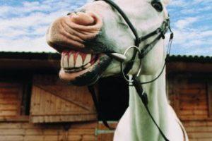 14-12-15 Pferd.jpg