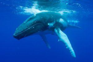 14-12-19 Wale.jpg