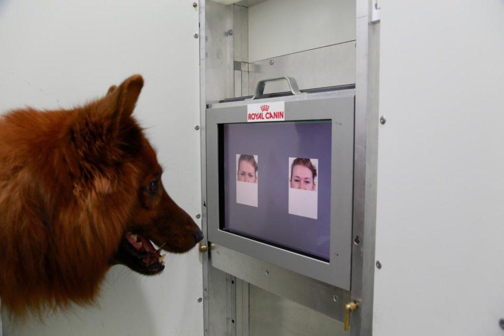 15-02-13 Hund.jpg