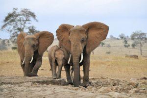 15-03-25-elefant.jpg