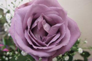 15-04-30 Rose.jpg