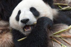 15-07-23-panda_seite.jpg