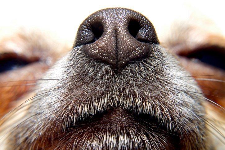 15-09-22 Spuerhund.jpg