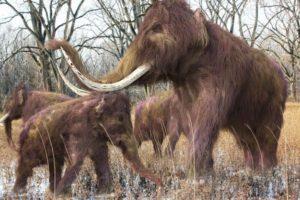 15-10-15 Mammuts.jpg