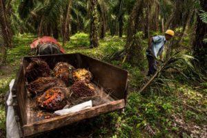 15-12-26 Palmöl.jpg