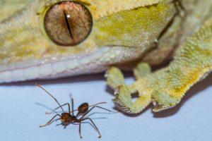 16-01-18 Gecko.jpg