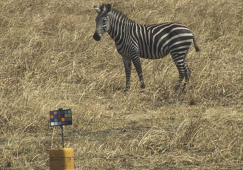 16-01-25 Zebra.jpg