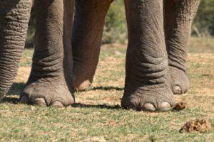 16-01-26 Elefant.jpg