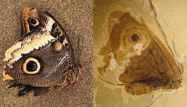 16-02-04 Schmetterling.jpg