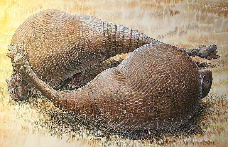 16-02-22 Glyptodonten.jpg