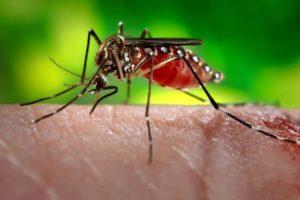 16-03-16-dengue.jpg