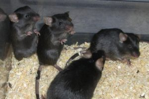 16-05-18 Mäusestress.jpg