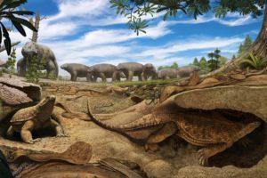 16-07-18 Schildkröten.jpg
