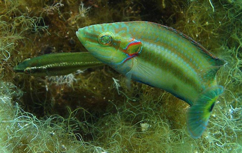 16-08-08 Fische.jpg