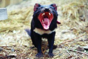 16-08-30-tasmanian.jpg