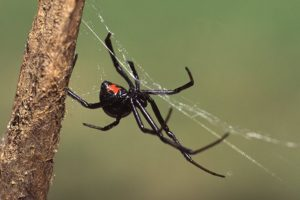 16-09-20-blackwidow.jpg