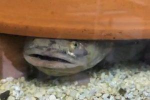 16-09-22 Fisch.jpg