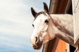 16-09-23-pferd.jpg