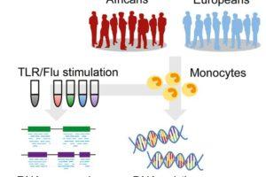 16-10-20 Immunsystem.jpg