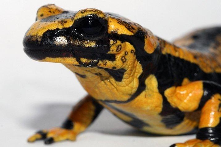 17-04-19-salamander.jpg