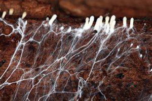 17-04-25-fungi.jpg