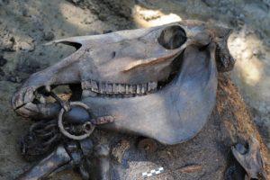 17-04-27 Pferd.jpg