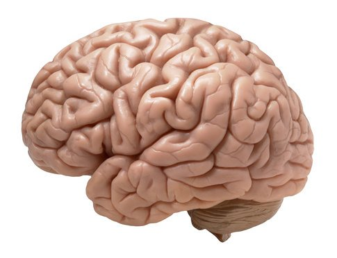 17-05-08 Gehirn.jpg