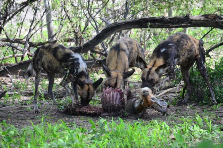 17-09-05 Hunde.jpg