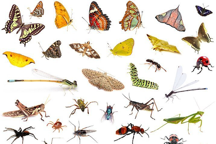 17-10-18-insekten.jpg