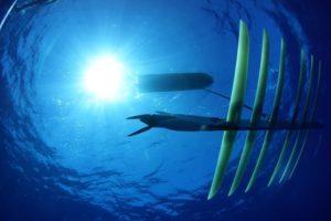 17-11-23+Surfer_Seite.jpg