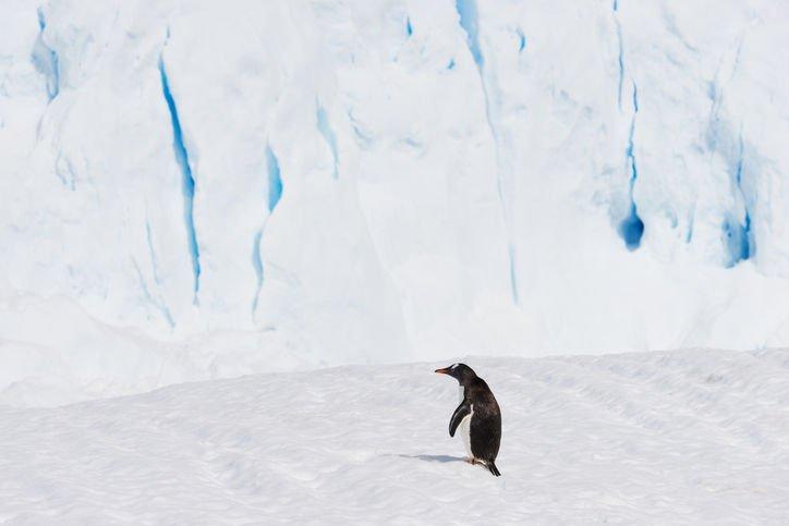 17-12-11 Antarktis.jpg