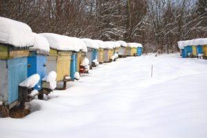 17-12-21 Bienen.jpg