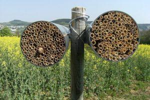 Wildbienen-Nisthilfe
