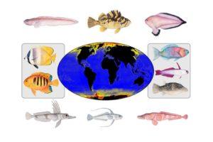 Artbildung bei Fischen